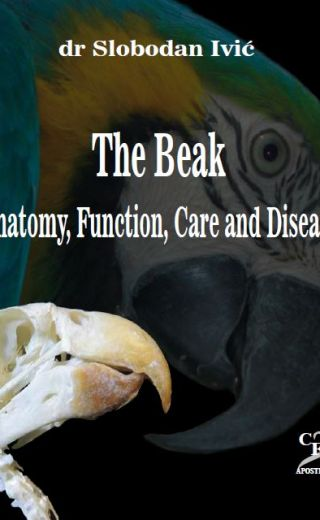 The Beak – Anatomy, Function, Care and Diseases